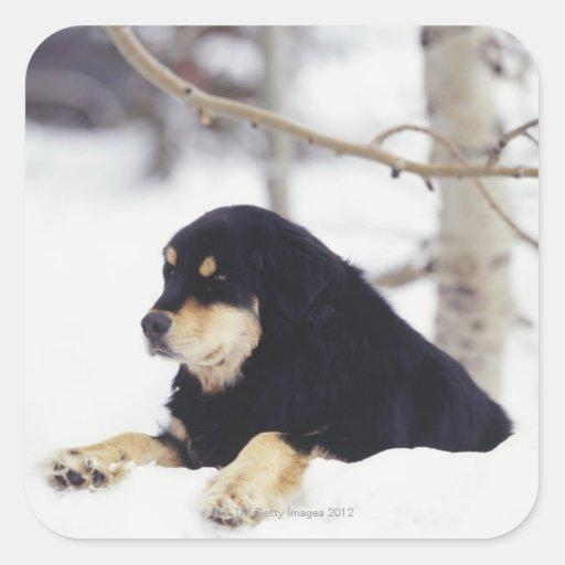 Black dog lying in snow square sticker