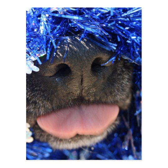 Black Dog Nose with Blue Tinsel Tongue Out Postcard