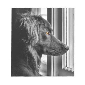 Black dog memo notepads