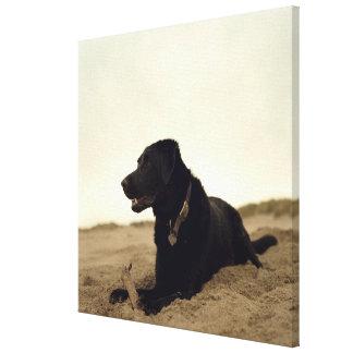 Black dog on sand with stick canvas print