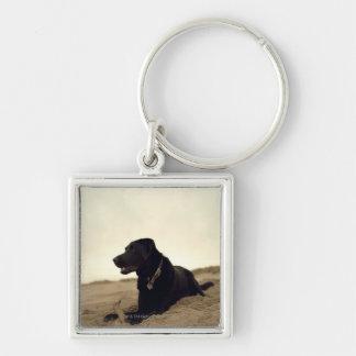 Black dog on sand with stick keychain