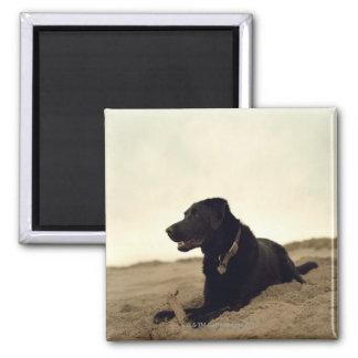 Black dog on sand with stick magnet
