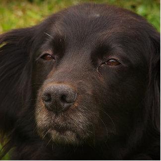 Black Dog Photo Sculpture