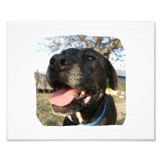 Black Dog Pink Tongue Smiling In Camera Photo Print