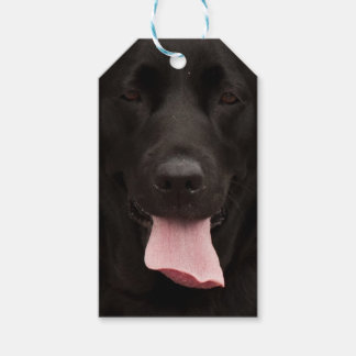 Black dog portrait pack of gift tags