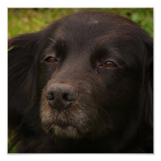 Black Dog Print