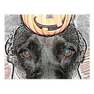 black dog pumpkin on head sketch postcard