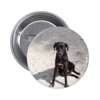 Black dog with an evil eye button