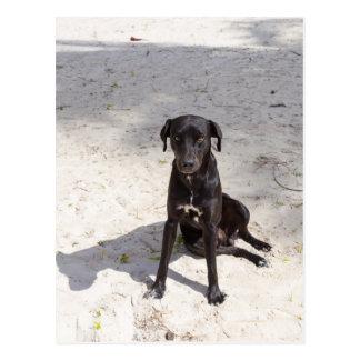 Black dog with an evil eye postcard