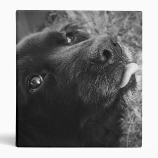 Black Dog With Tongue Out Avery Binder