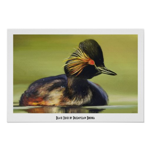 Black Duck bird portrait painting Poster