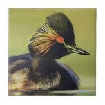 Black Duck bird portrait painting Tiles