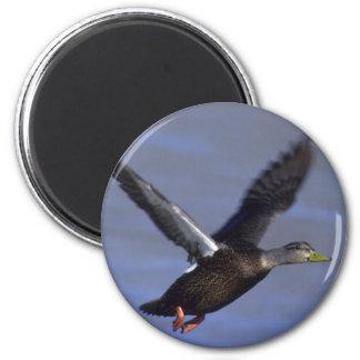 Black Duck Magnet