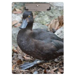 black duck orange eyes looking bird clipboard