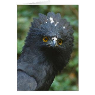 Black Eagle Notecards Card
