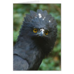 Black Eagle Notecards Stationery Note Card