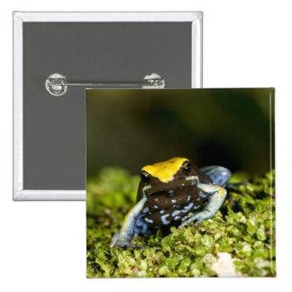 Black-eared Mantella, Mantella expectata, 2 Pinback Button