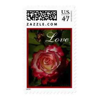 Black-Edged Red Rose Postage