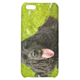 Black English Cocker Spaniel Case For iPhone 5C