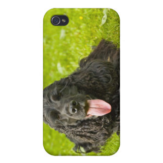 Black English Cocker Spaniel Cases For iPhone 4