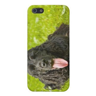 Black English Cocker Spaniel iPhone 5 Covers