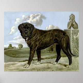 Black English Mastiff Poster
