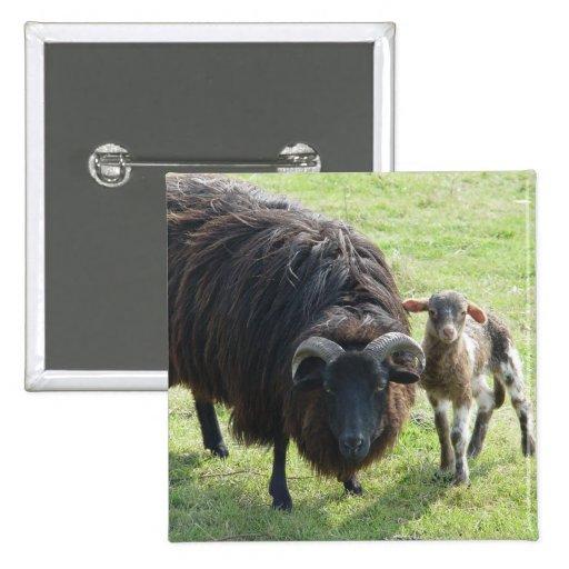 Black Ewe 2 Inch Square Button