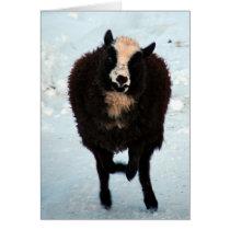 Black Ewe Sheep Merry Christmas Card