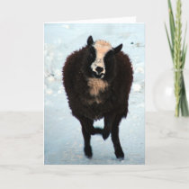 Black Ewe Sheep Merry Christmas Holiday Card