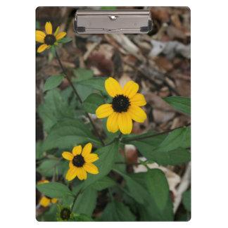 black eye susan flowers pretty field yellow flower clipboard