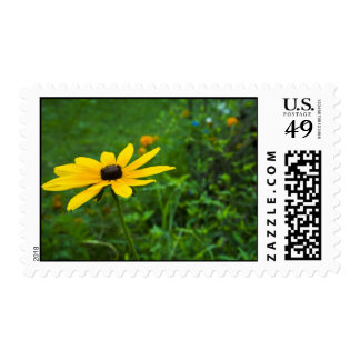 Black eye susan postage