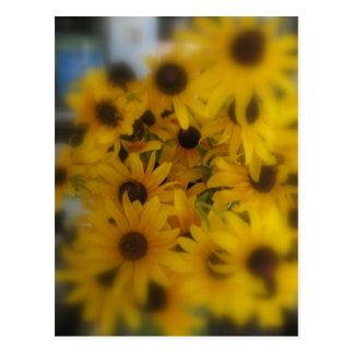 Black Eye Susans - 3 Postcard