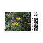 Black Eye Susans Postage Stamps