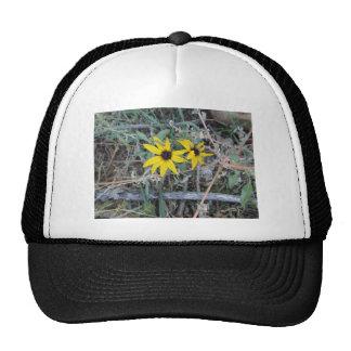Black Eyed Susan 001 Rocky Mountain Arsenal 2012.J Trucker Hat