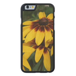 black-eyed-susan-18 carved® maple iPhone 6 slim case