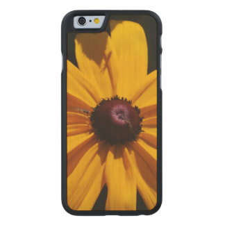black-eyed-susan-46 carved® maple iPhone 6 case
