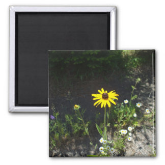 Black Eyed Susan and White Flowers Magnet