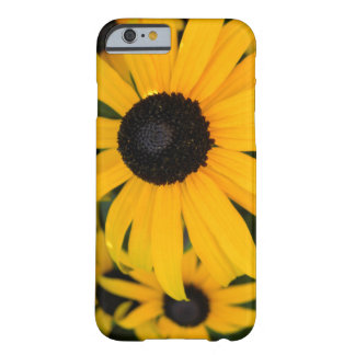 Black-Eyed Susan Barely There iPhone 6 Case