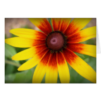 Black Eyed Susan - Blank Inside Card