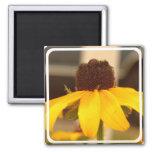 Black Eyed Susan Blossom Square Magnet Refrigerator Magnet