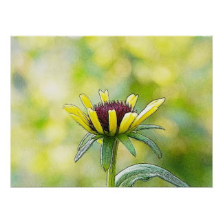 Black Eyed Susan Bud In Profile Posters