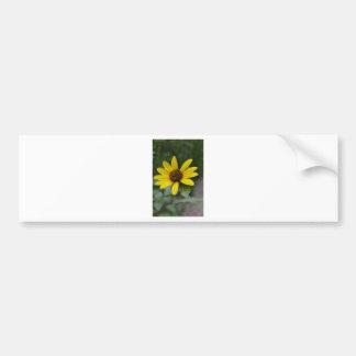 Black Eyed Susan by LellO Bumper Sticker