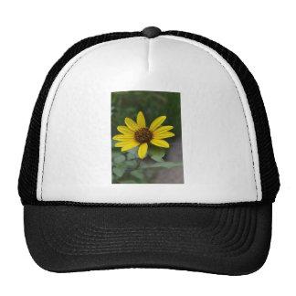Black Eyed Susan by LellO Mesh Hat