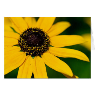 Black-eyed Susan Card