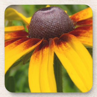 Black Eyed Susan Coaster Set