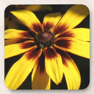 Black Eyed Susan Cork Coasters