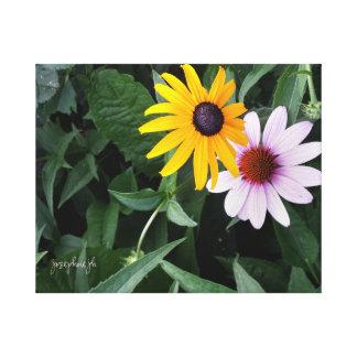 Black Eyed Susan Echinacea jjhelene Canvas