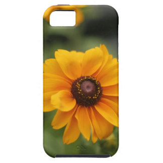Black Eyed Susan Floral iPhone 5 Case