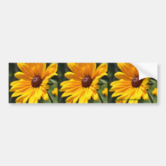 Black Eyed Susan Flower Bumper Sticker Car Art