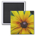 Black Eyed Susan Flower Square Magnet Magnet